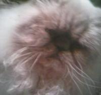 kitty4's Photo