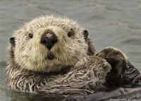 Otter_Pop's Photo